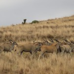 Wildlife at Clarens Safari.