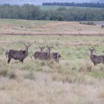 Waterbuck at Clarens Safari.
